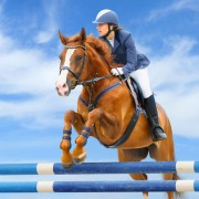 Equestrian Jumping Event