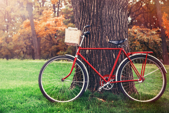 vintage bicycle against a tree trunk
